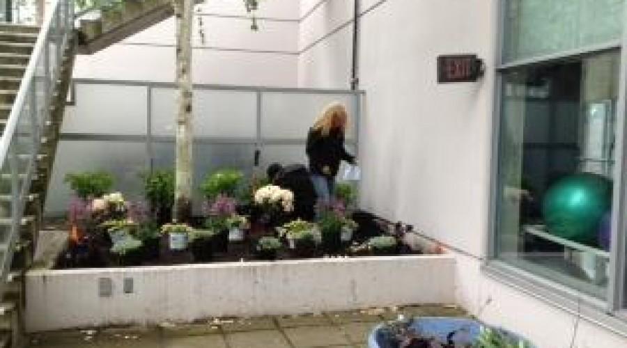 Planting Rooftop Garden